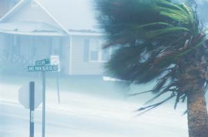 Palm Tree Being Blown Hurricane