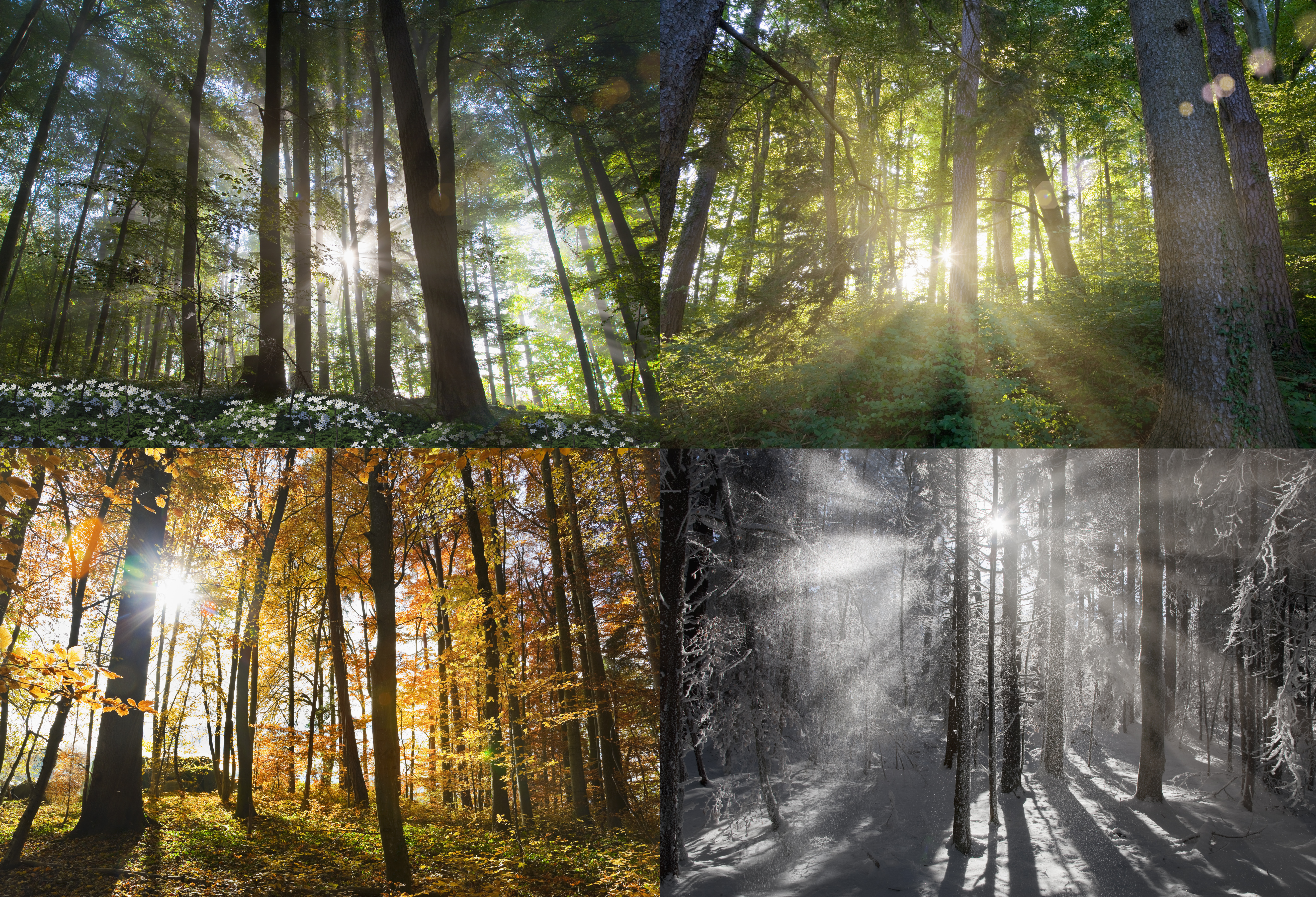Views of four seasons of forest